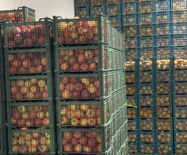 mojan-dried-fruit (3)