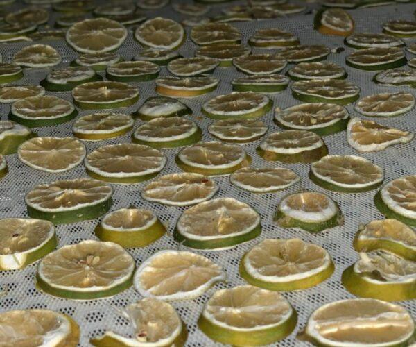 خشک کردن میوه خشک موژان